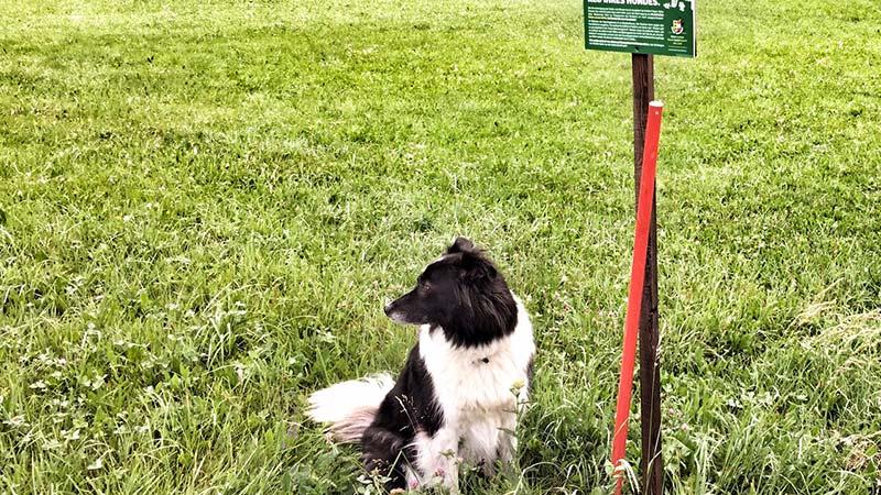 Hundekot Weide