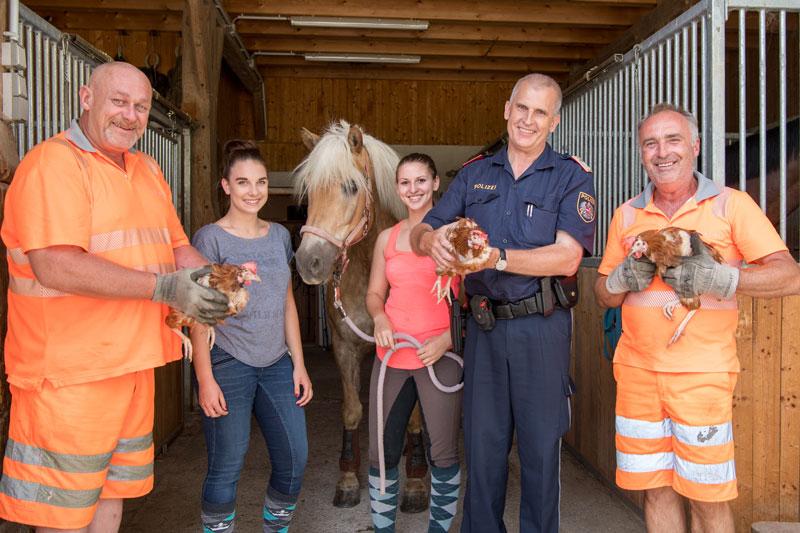 Drei Hühner Tage nach Unfall gefunden