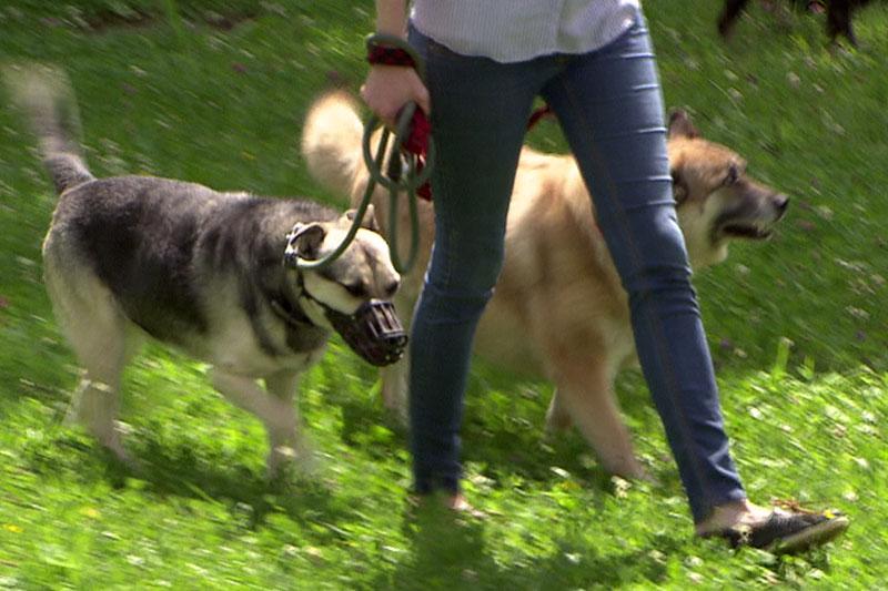 Frau mit zwei Hunden an der Leine