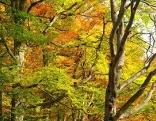 Buchenwälder im Nationalpark Kalkalpen