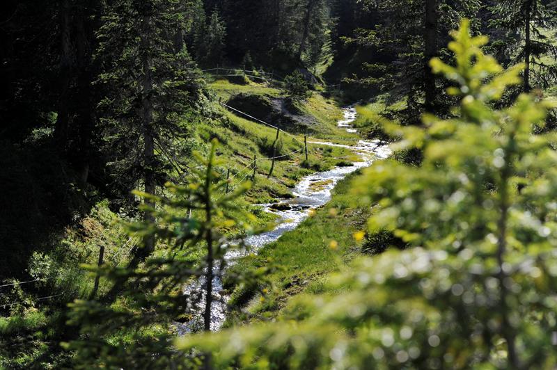 Gaistal Bild 2: Bach im Grünen