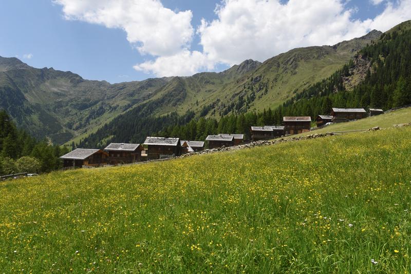 Ober- und Unterstalleralm Bild 9: Blumenwiese mit gelben Blumen und im Hintergrund befinden sich Hütten und Berge