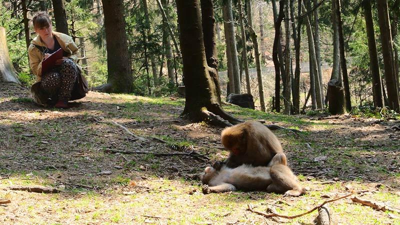Affen Affenberg 2017 Wissenschaft Forschung