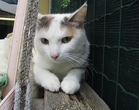Katze Suna in Salzburg-Sam entlaufen