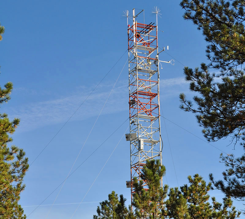 Turm in Kiefernwald
