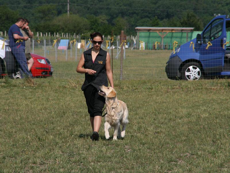 Gebrauchshunde: Frau und Hund gehen nebeneinander