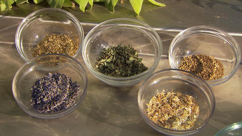 Verschiedene Teesorten zur Stimmungsaufhellung