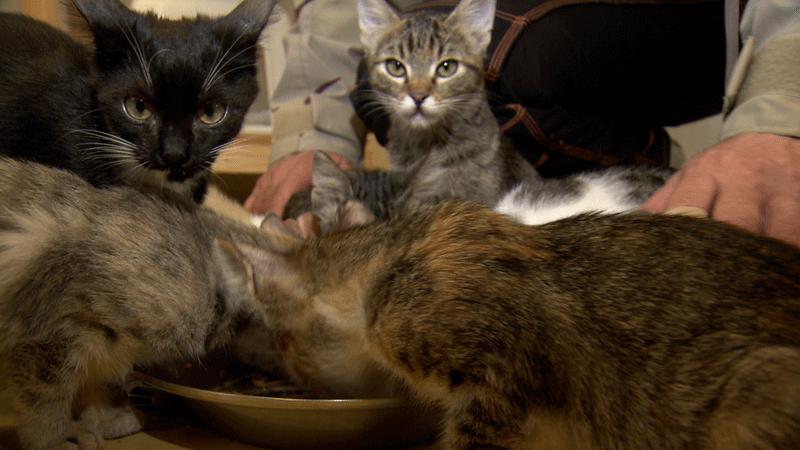 Tierheim Hund und Katze