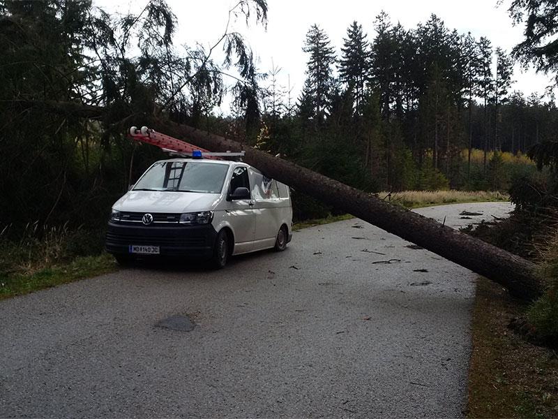 Baum kracht auf EVN Auto