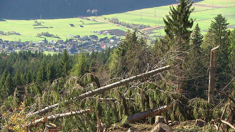 Schadholz Aufräumen Unwetter Sturm Gitschtal Gailtal