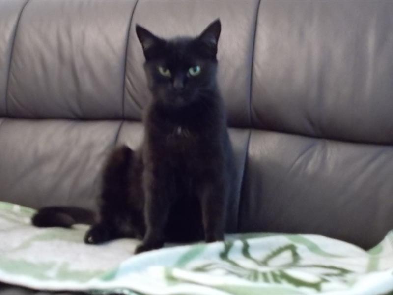 """Katze """"Pezi"""" entlaufen"""