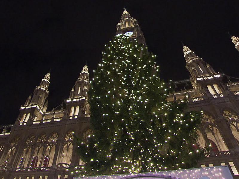 Weihnachtsbaum vor dem Wiener Rathaus
