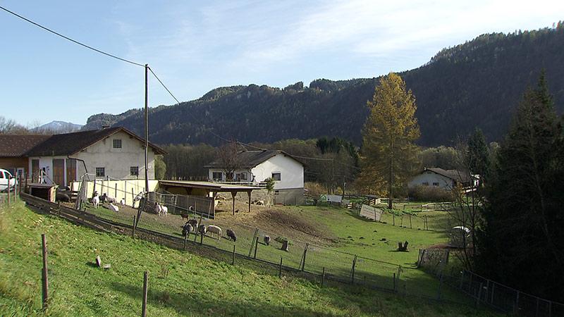 Melcherhof Gnadenhof Grafenstein Fitnessstudio Hofhilfe
