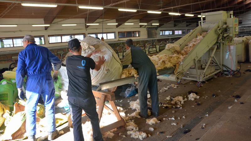 Schafwolle wird vor dem Transport gepresst
