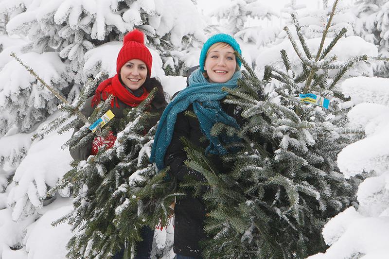 Niederösterreichische Christbaumproduzenten