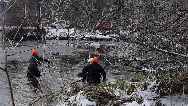Schwan Drau Villach Angelleine gerettet Feuerwehr