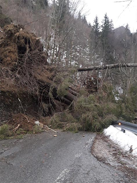 Seebergstraße Sturm Bäume auf Straße