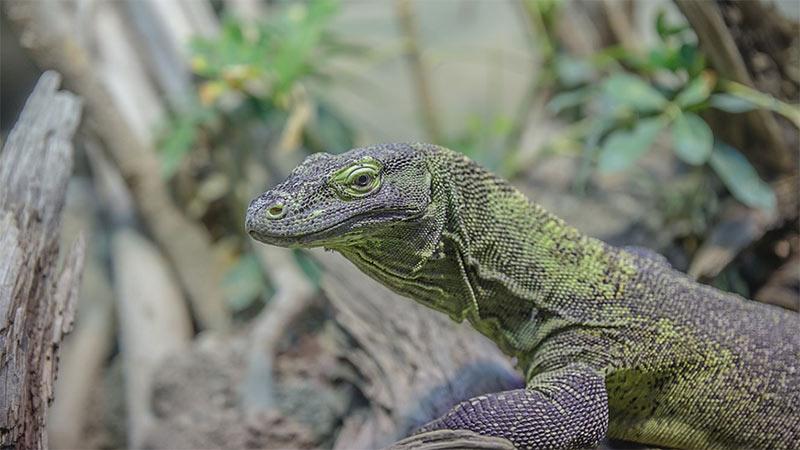 Schlangen Reptil Terrarium Waran