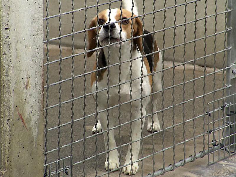 Hund im Tierschutzhaus Wien