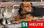 """Bei Tier daheim"" in ""Steiermark heute"""
