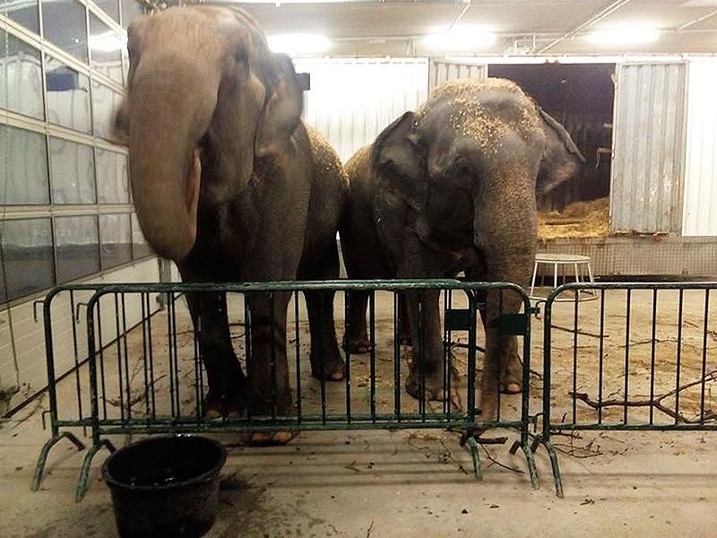 Elefanten im Bauhof