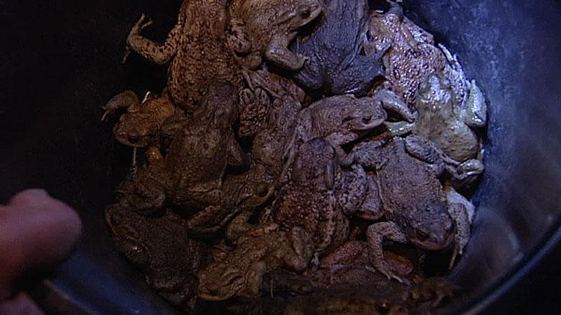 Froschrettung; Froschklauber; Frosch; Leopoldskron