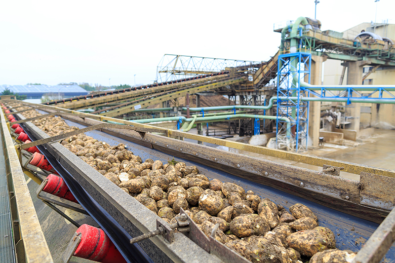Agrana Rübenernte Unterstützung für Bauern
