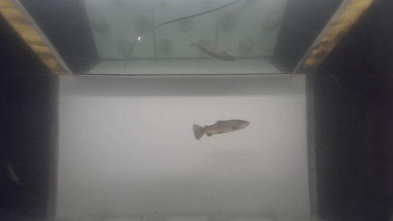 Fischlift Kelag Gössnitz Mölltal