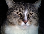 Katze blickt in Kamera