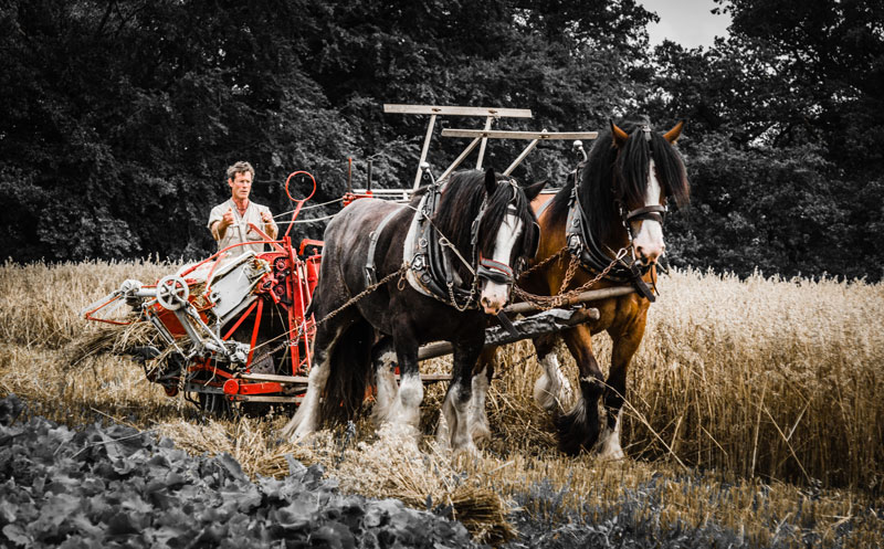 Pferde vor Pflug