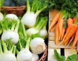 Fenchel und Karotten