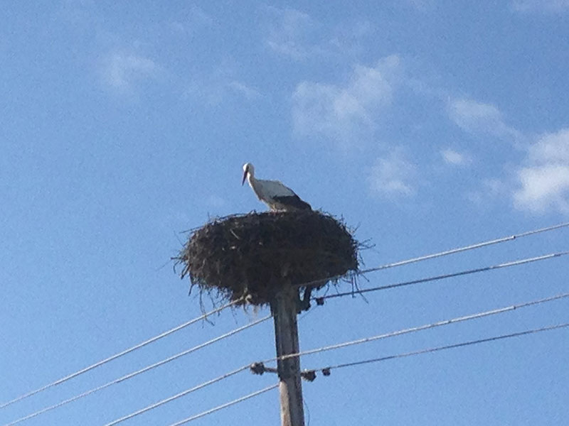 Storch im Nest in Eisenzicken