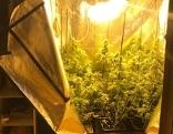 Cannabis-Aufzuchtanlage in Kleiderschrank in Hallein (Tennengau)