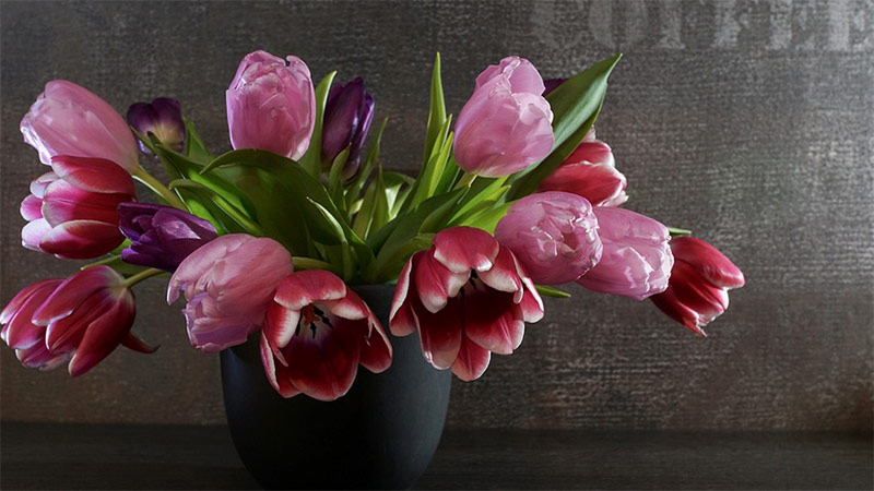 Tulpen Valentinstag Blumen