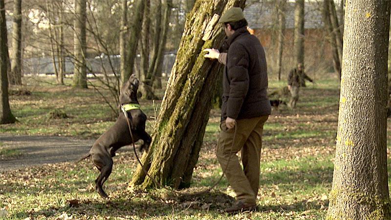 Käferschnüffelhund