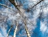 Baum Natur Wald Pilze