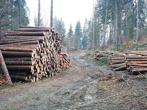 Les hlodovina vihar neurje podrto gozd odvoz