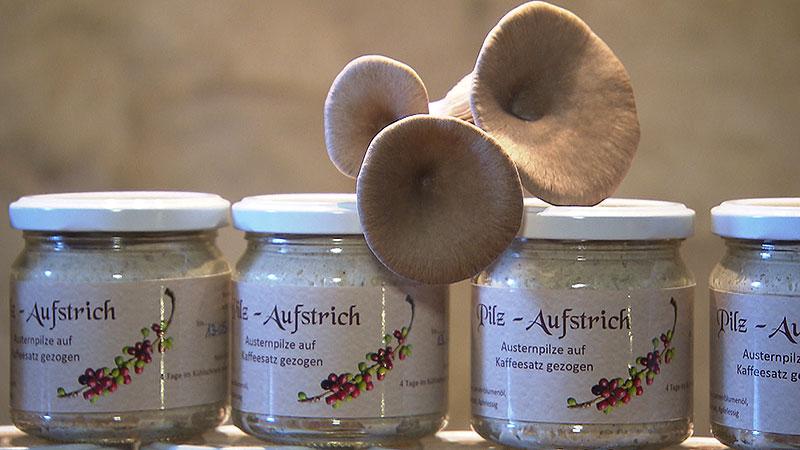 pilze selbst hergestellt zucht auf kaffeesud burgenland. Black Bedroom Furniture Sets. Home Design Ideas