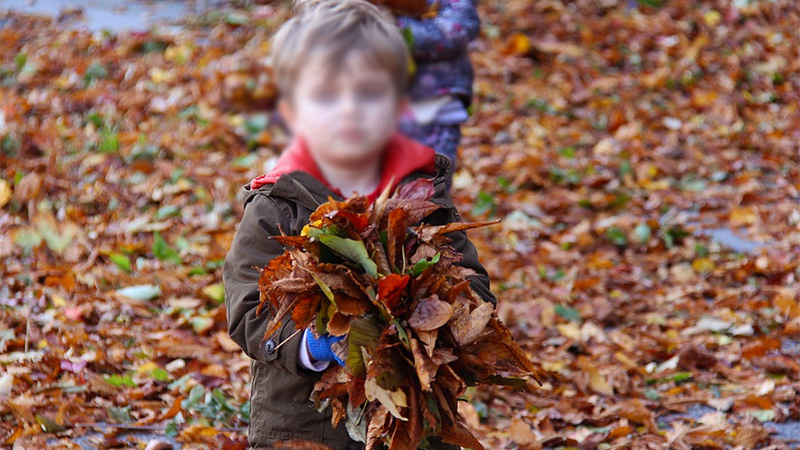 Kind Bub Blätter
