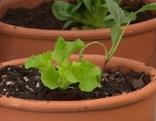 Salat im Topf