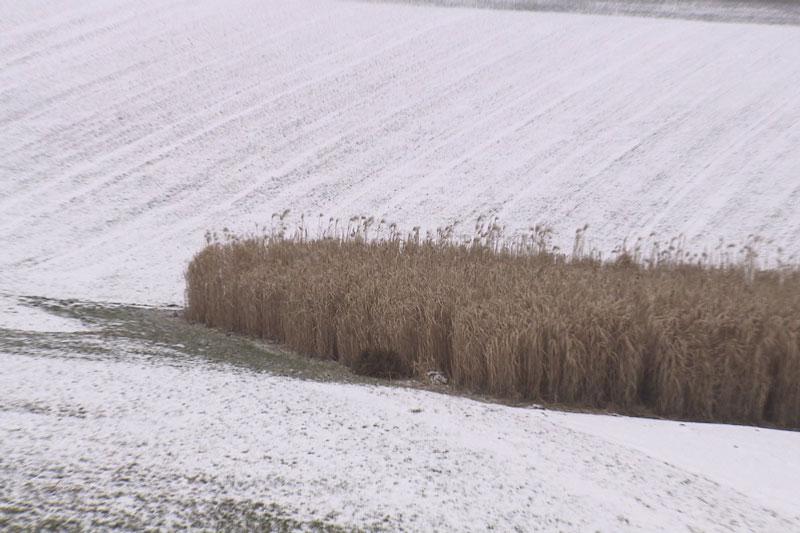 Frost Kältewelle
