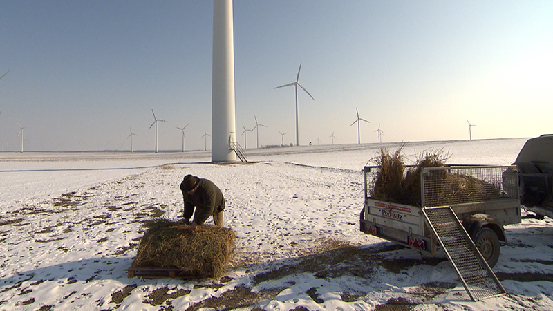 Jäger füttert Tiere im Winter