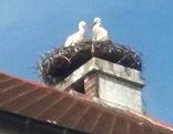 Störche am Dach