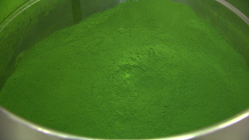 Algen Produktion startet Bruck an der Leitha ecoduna eparella