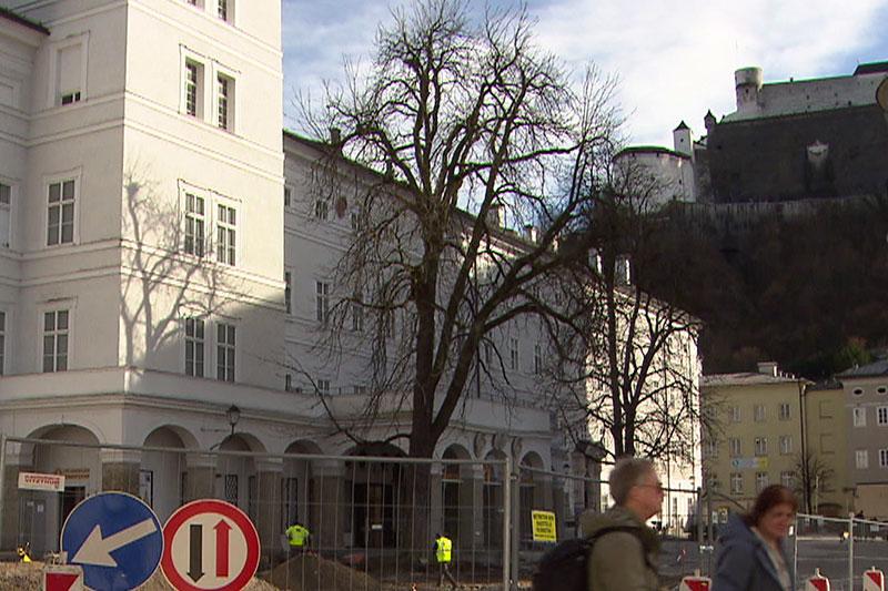 Kastanie auf dem Residenzplatz in der Salzburger Altstadt