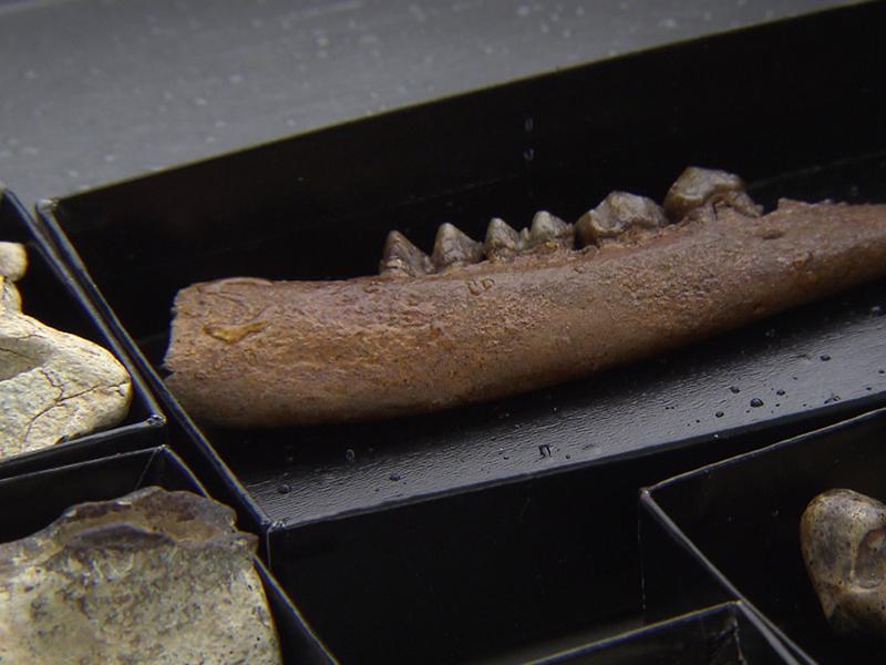 Muschelgrube Nexing Knochen Muscheln