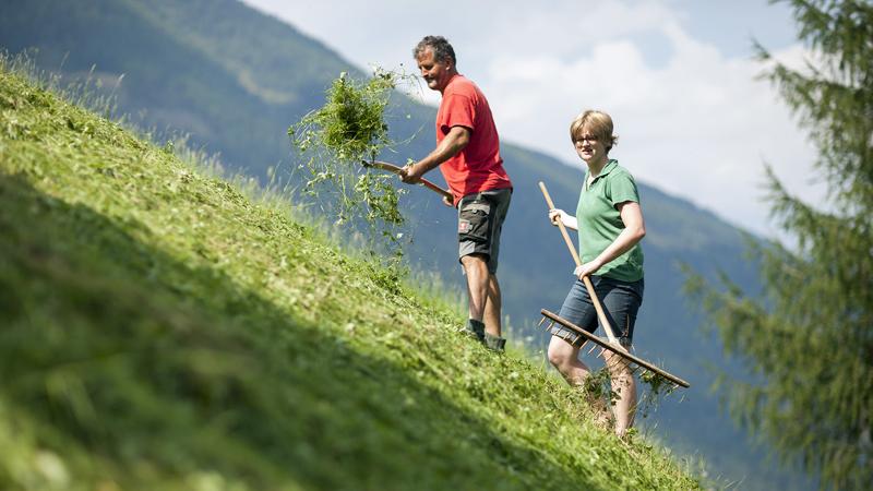Freiwillig am Bauernhof