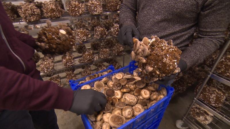 Körbe voller Pilze