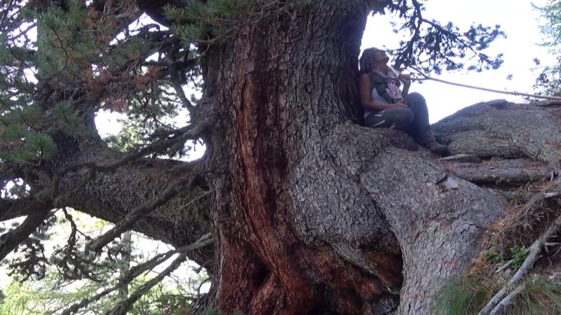 Astrid auf Baum