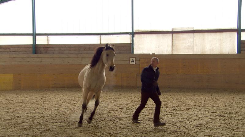 Pferd, Halle, Training, Wolfgang Wograndl